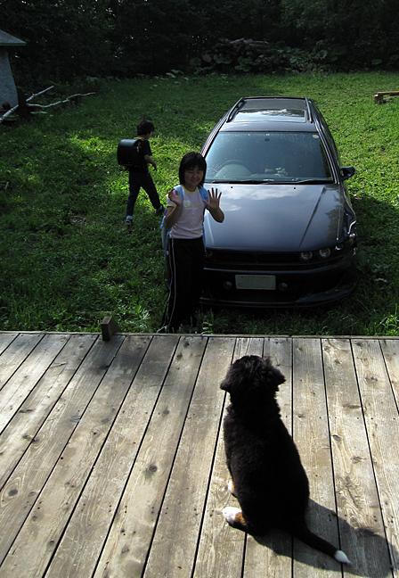 北海道美瑛の丘のバーニーズマウンテンドッグ