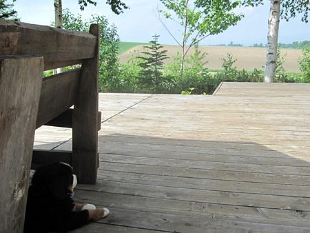 美瑛の丘のおもちゃ屋さん看板犬バーニーズマウンテンドッグと丘