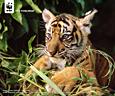 トラとトラの森を守るプロジェクト