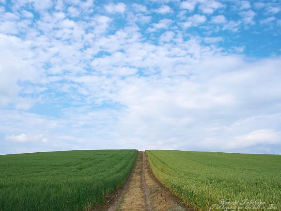 空へと続く道