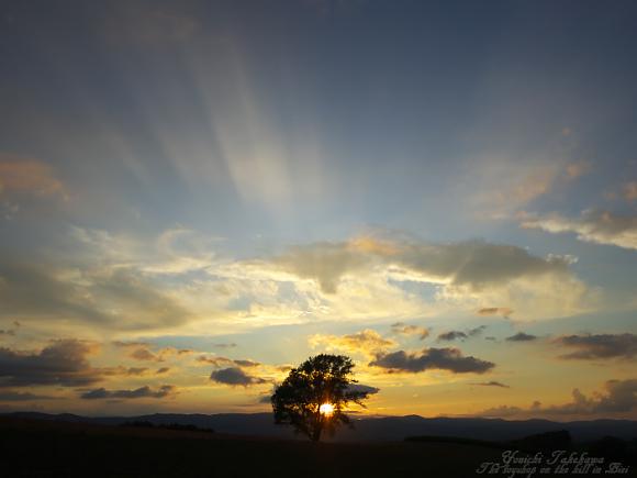 ツァイス光を抱く樹