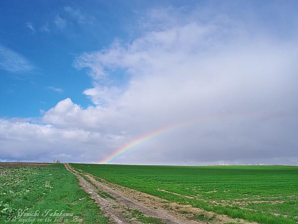 虹へ続く道