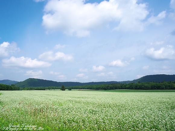 夢で見たお花畑